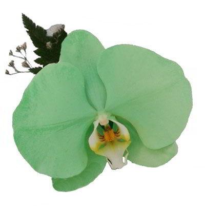 Orquídea Verde Jade