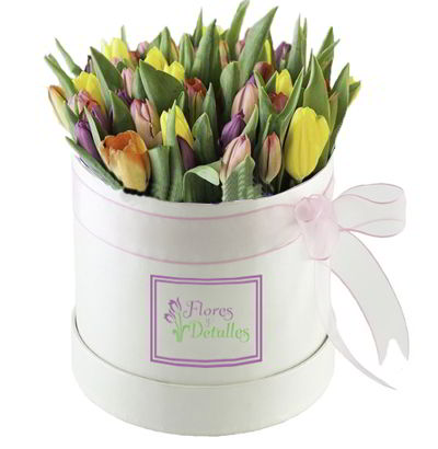 Box de 25 Tulipanes mixtos