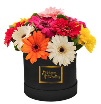 Box de Gerberas mixtas